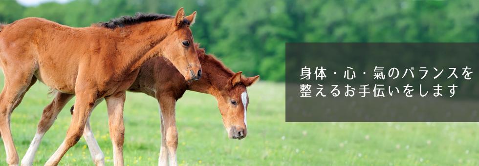 人と馬の整体院